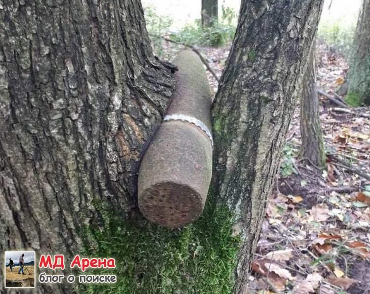 Находки ВОВ вросшие в дерево