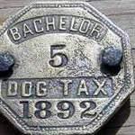 Находки собачьи жетоны. Фото